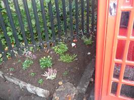 Phone box garden 2