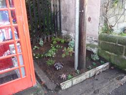 Phone box garden 1